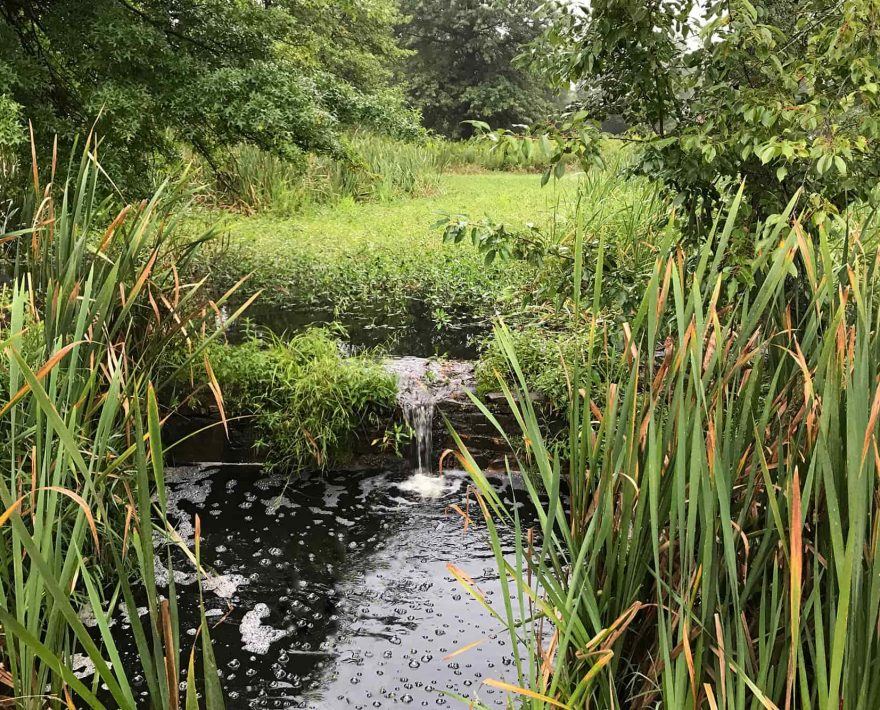 Pond on Property