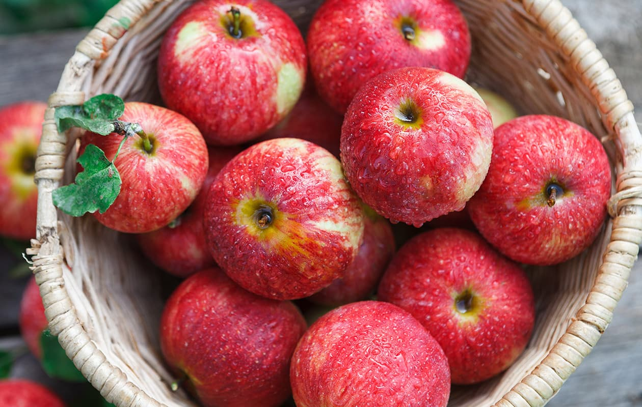 freshly picked apples from an orchard