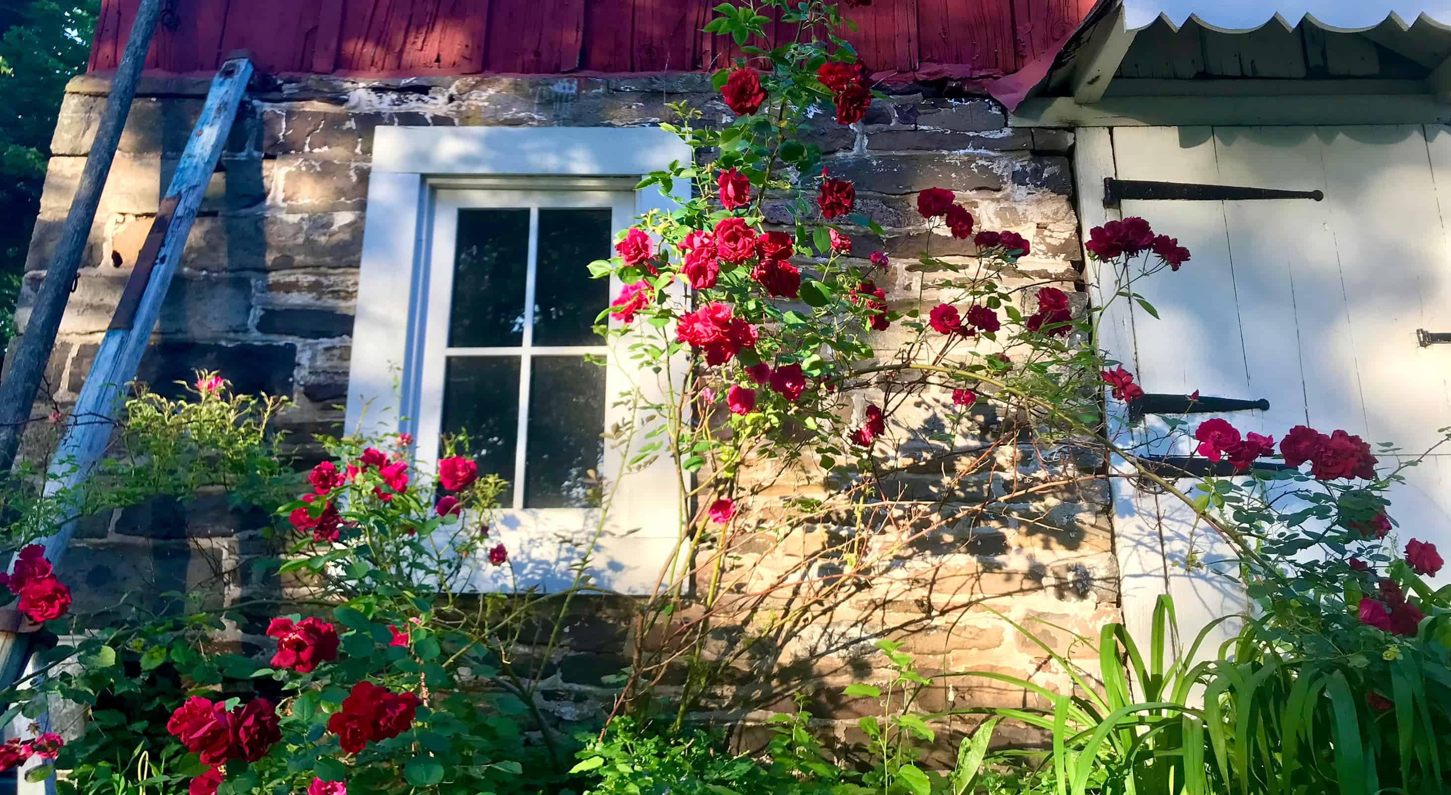 Springtime Flowers at Galvanized America Inn